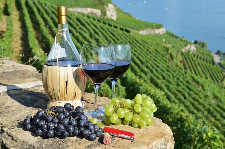 В России поддержат развитие винного туризма